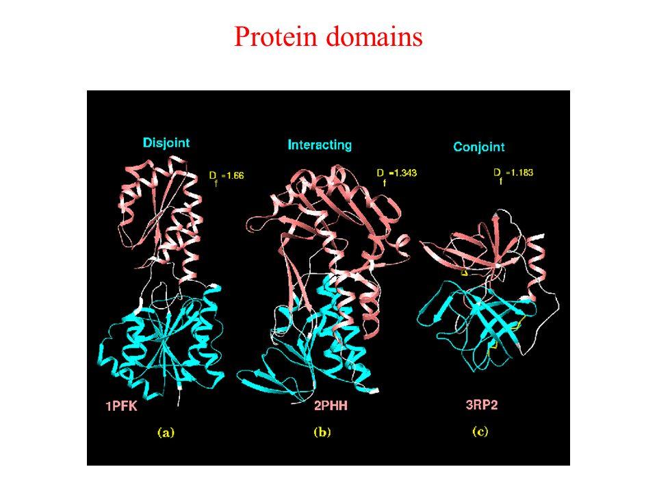 Protein domains Sposób wyróżnienia domeny w cząsteczce białka jest często intuicyjny, ale możliwe jest przypisanie domenom pewnych, wyróżniających je