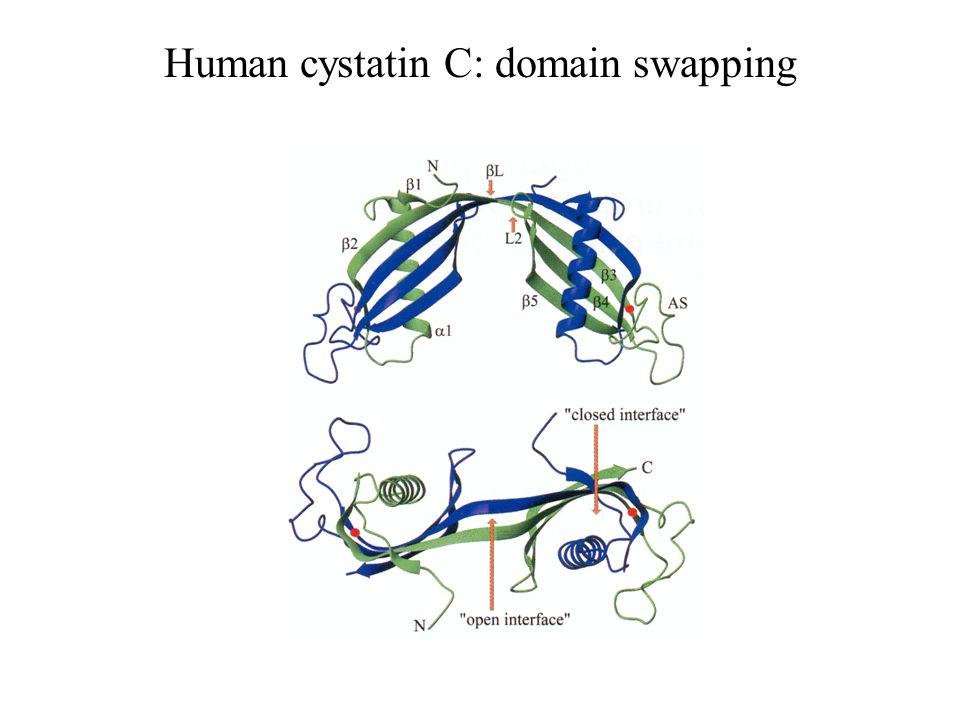 Human cystatin C: domain swapping