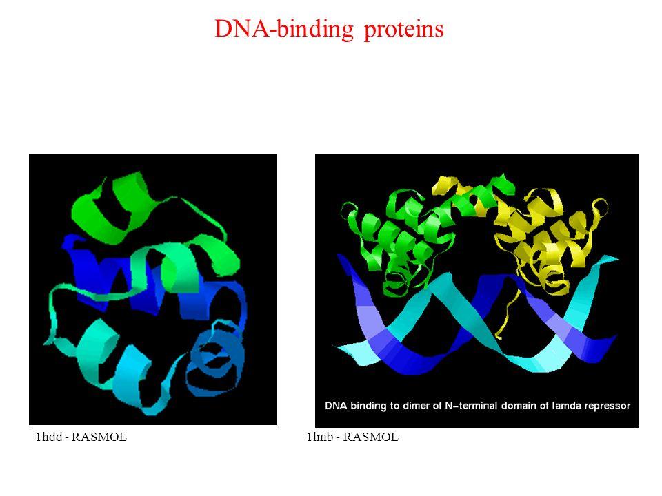 DNA-binding proteins 1hdd - RASMOL1lmb - RASMOL