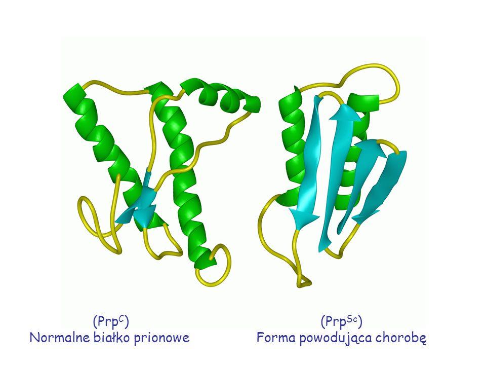 (Prp C ) Normalne białko prionowe (Prp Sc ) Forma powodująca chorobę
