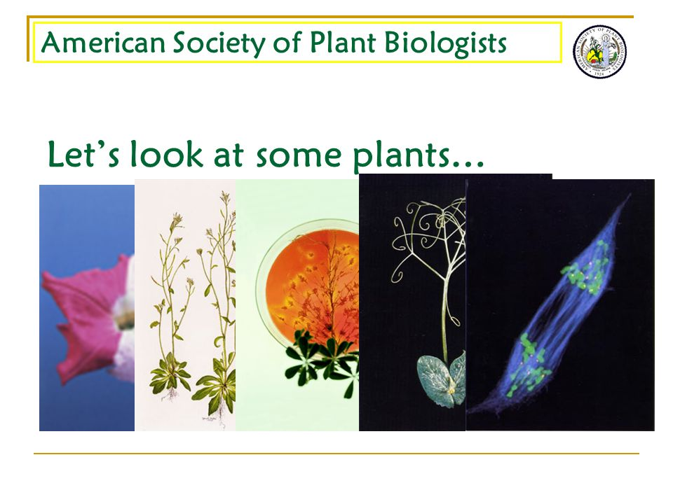 American Society of Plant Biologists Lets look at some plants…