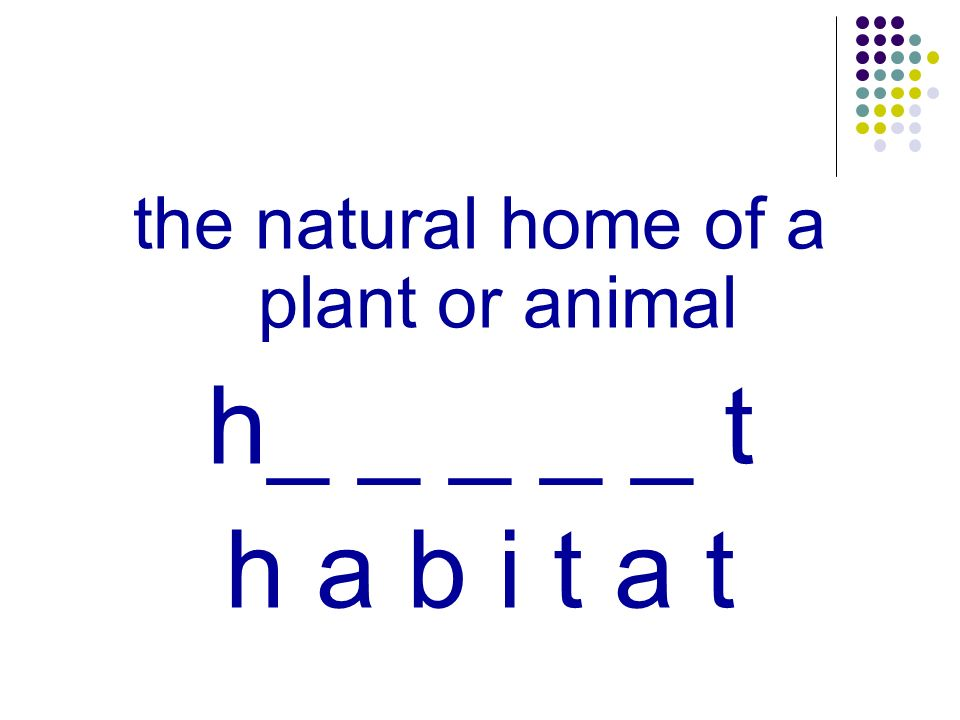 the natural home of a plant or animal h_ _ _ _ _ t h a b i t a t