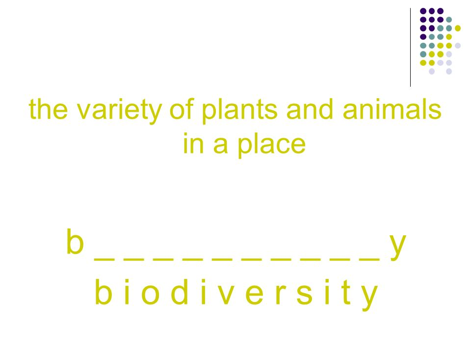 the variety of plants and animals in a place b _ _ _ _ _ _ _ _ _ _ y b i o d i v e r s i t y