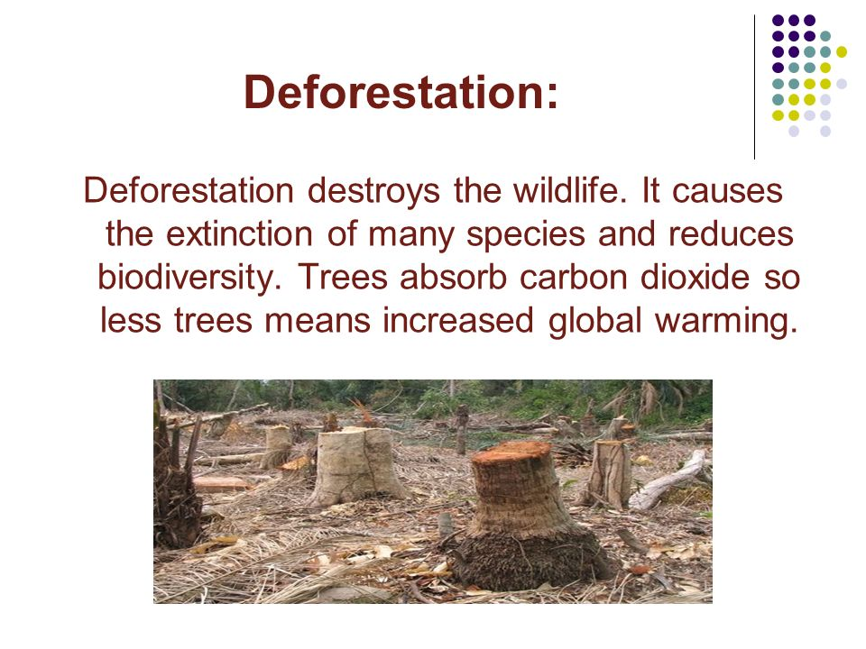 Deforestation: Deforestation destroys the wildlife. It causes the extinction of many species and reduces biodiversity. Trees absorb carbon dioxide so