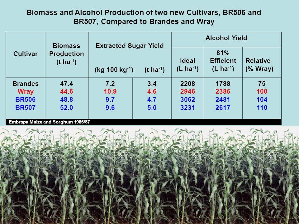 Cultivar Biomass Production (t ha -1 ) Extracted Sugar Yield (kg 100 kg -1 ) (t ha -1 ) Alcohol Yield Ideal (L ha -1 ) 81% Efficient (L ha -1 ) Relati