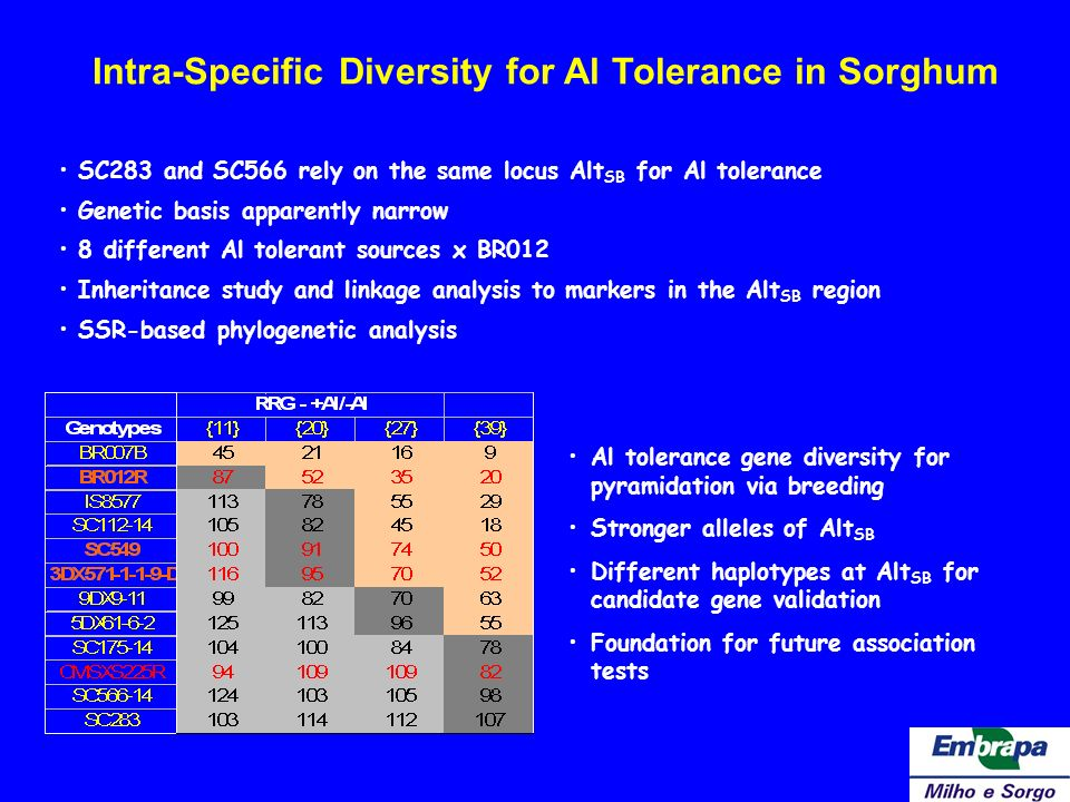 Intra-Specific Diversity for Al Tolerance in Sorghum SC283 and SC566 rely on the same locus Alt SB for Al tolerance Genetic basis apparently narrow 8
