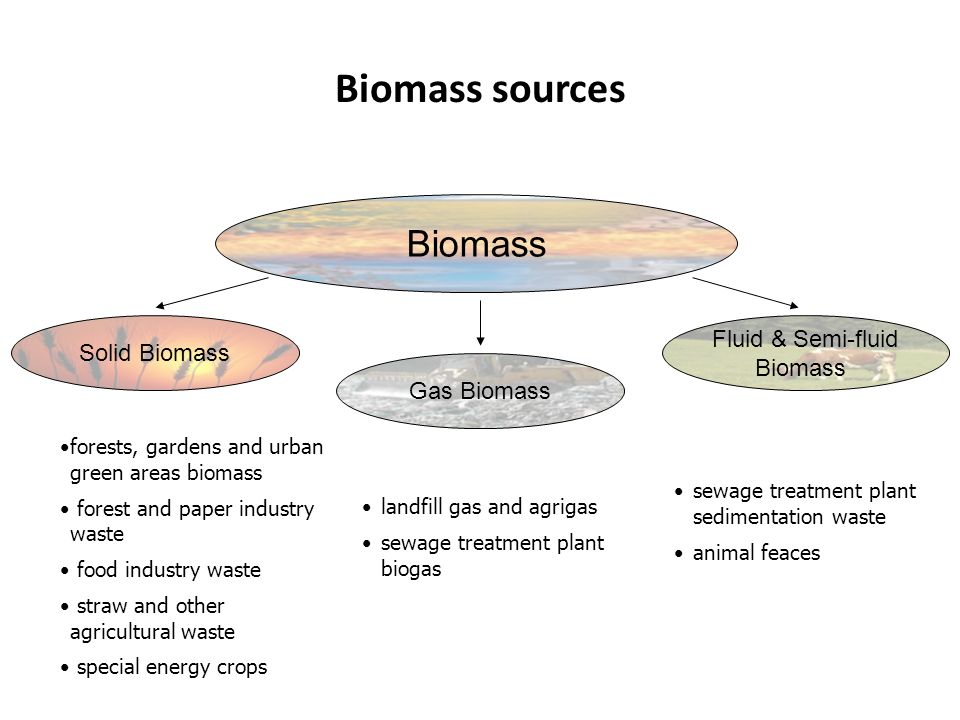Biomass sources Biomass Solid Biomass Gas Biomass Fluid & Semi-fluid Biomass forests, gardens and urban green areas biomass forest and paper industry