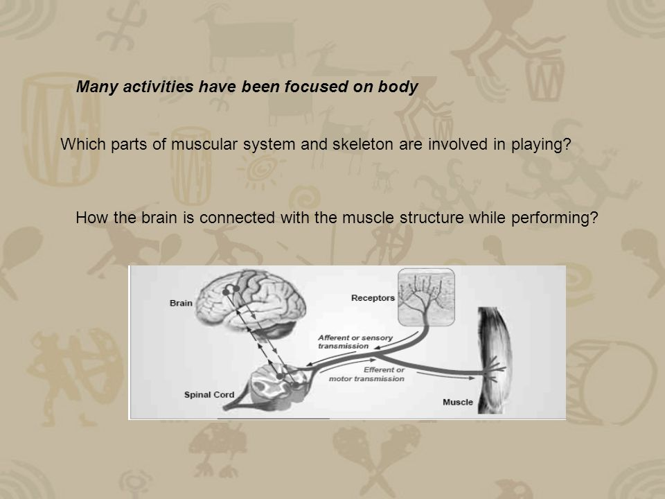 Many activities have been focused on body Which parts of muscular system and skeleton are involved in playing.