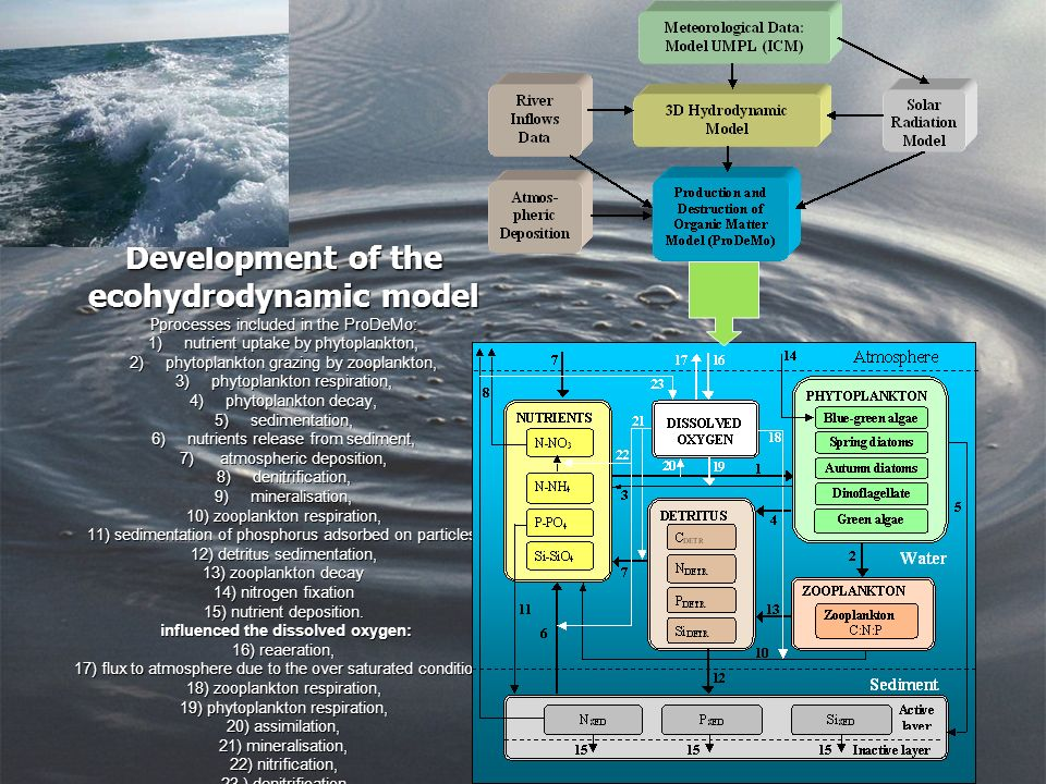 Development of the ecohydrodynamic model P processes included in the ProDeMo: 1) nutrient uptake by phytoplankton, 2) phytoplankton grazing by zooplankton, 3) phytoplankton respiration, 4) phytoplankton decay, 5) sedimentation, 6) nutrients release from sediment, 7) atmospheric deposition, 8) denitrification, 9) mineralisation, 10) zooplankton respiration, 11) sedimentation of phosphorus adsorbed on particles, 12) detritus sedimentation, 13) zooplankton decay 14) nitrogen fixation 15) nutrient deposition.