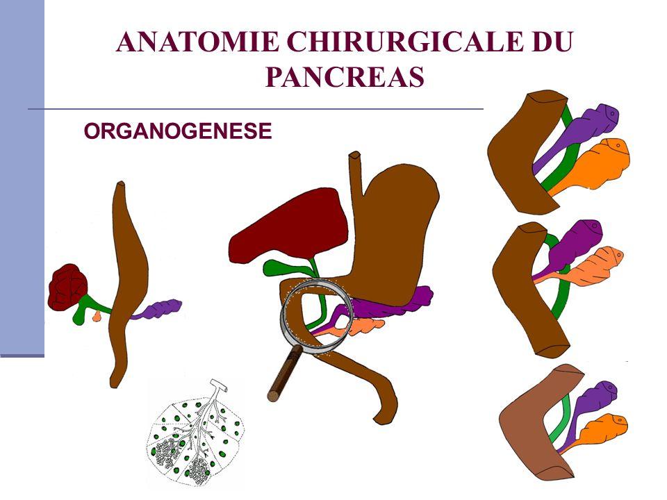 ORGANOGENESE