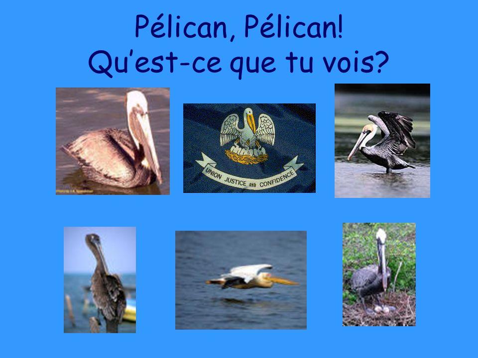 Pélican, Pélican! Quest-ce que tu vois