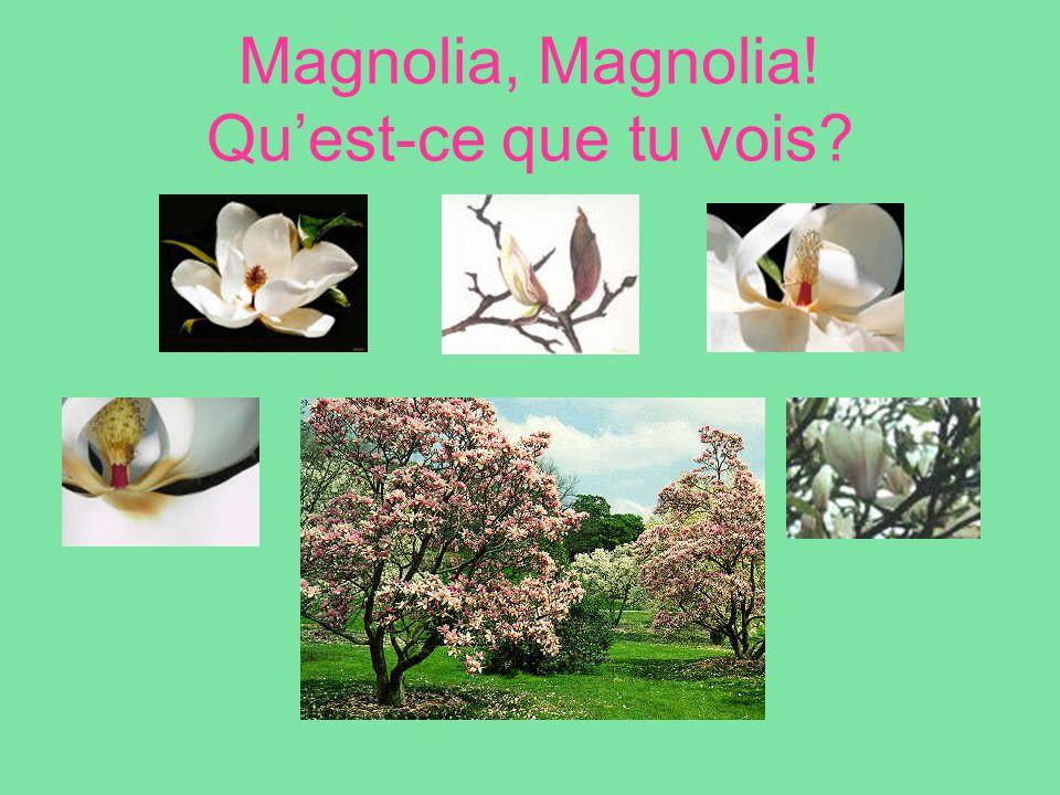 Magnolia, Magnolia! Quest-ce que tu vois