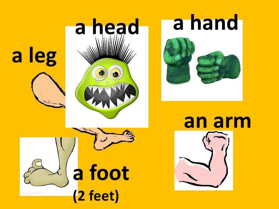 a head a hand an arm a foot (2 feet) a leg