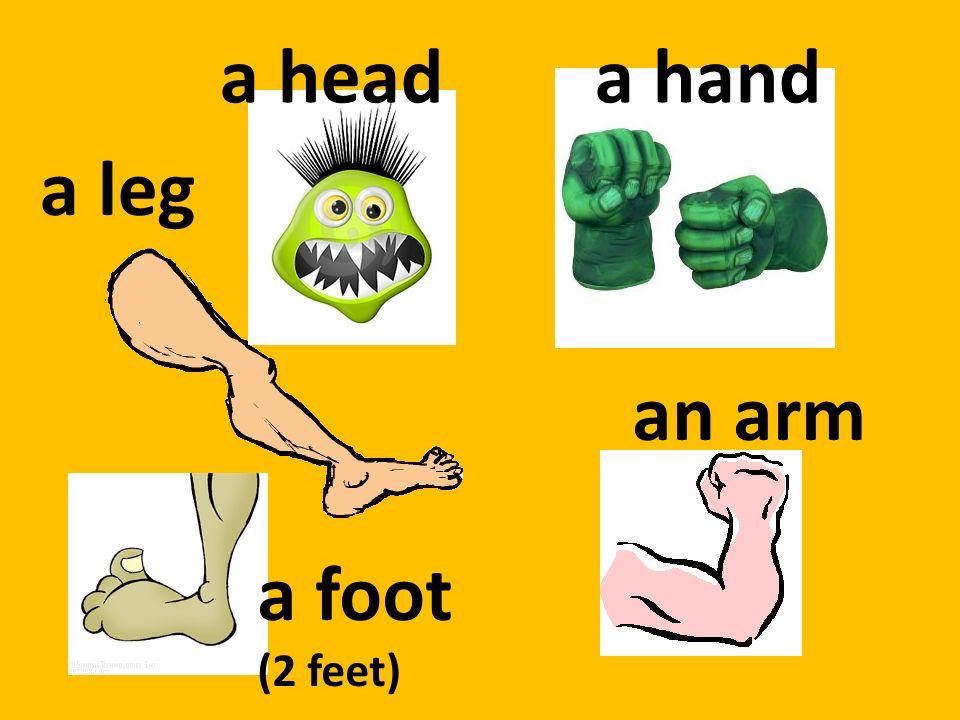 a heada hand an arm a foot (2 feet) a leg