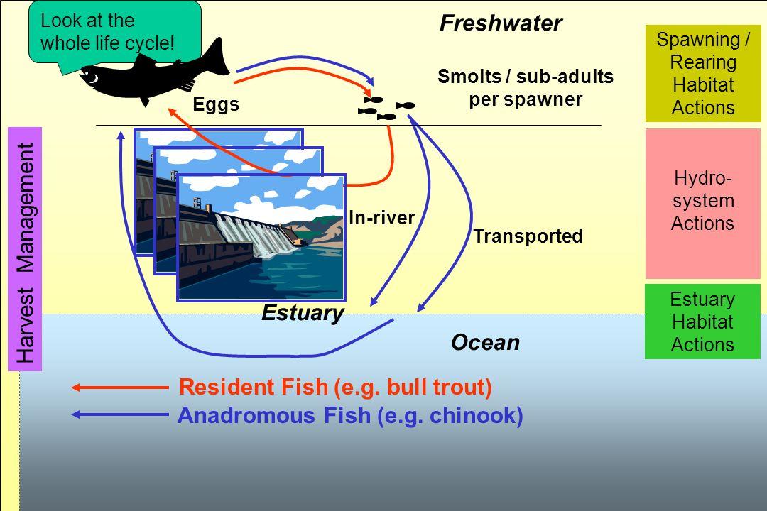 14 Freshwater Ocean In-river Transported Smolts / sub-adults per spawner Eggs Estuary Harvest Management Spawning / Rearing Habitat Actions Estuary Ha
