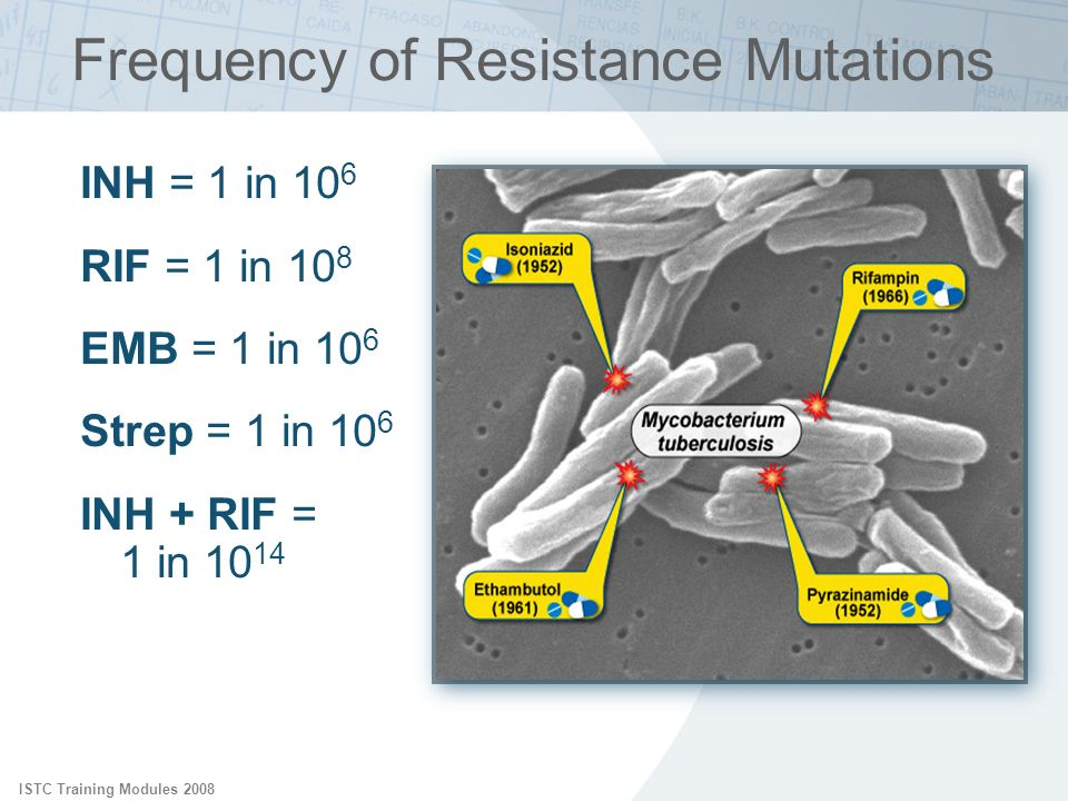 ISTC Training Modules 2008 INH = 1 in 10 6 RIF = 1 in 10 8 EMB = 1 in 10 6 Strep = 1 in 10 6 INH + RIF = 1 in 10 14 Frequency of Resistance Mutations