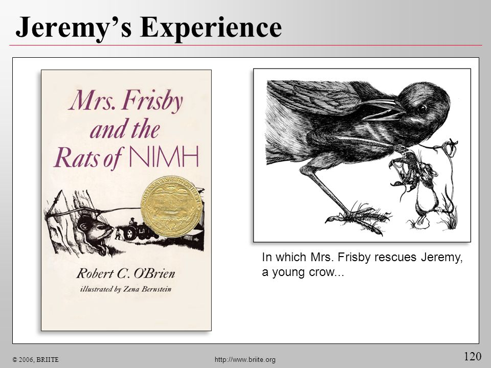 120 © 2006, BRIITE http://www.briite.org Jeremys Experience In which Mrs. Frisby rescues Jeremy, a young crow...