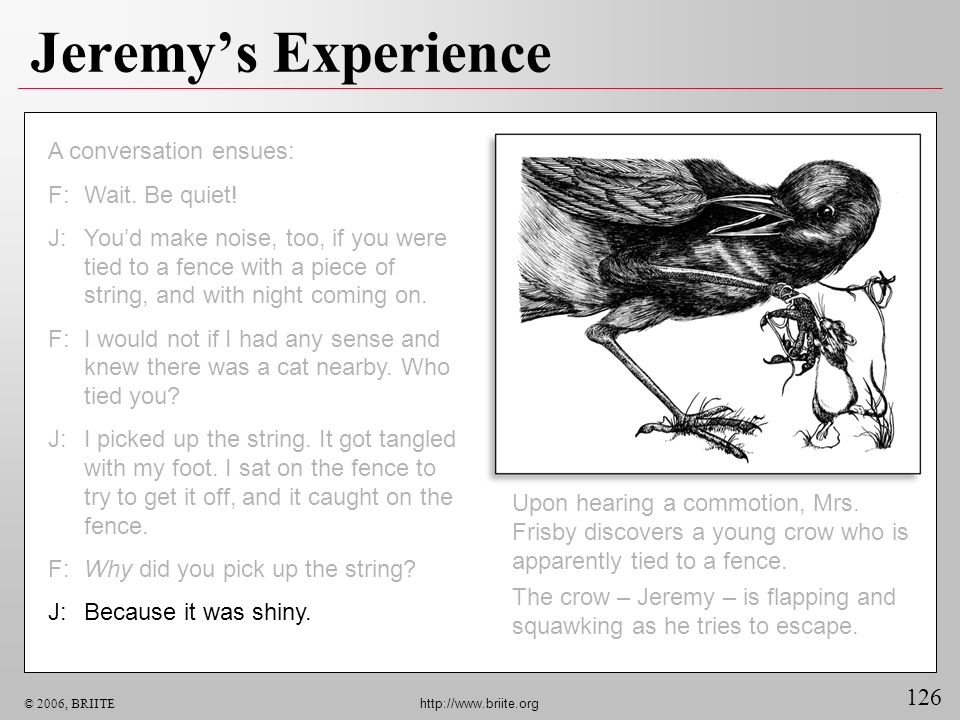 126 © 2006, BRIITE http://www.briite.org Jeremys Experience Upon hearing a commotion, Mrs. Frisby discovers a young crow who is apparently tied to a f