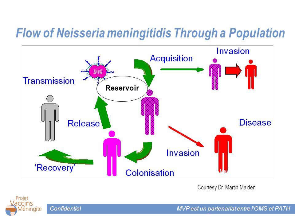 Confidentiel MVP est un partenariat entre lOMS et PATH Flow of Neisseria meningitidis Through a Population Courtesy Drs. Maiden and McLennan Courtesy