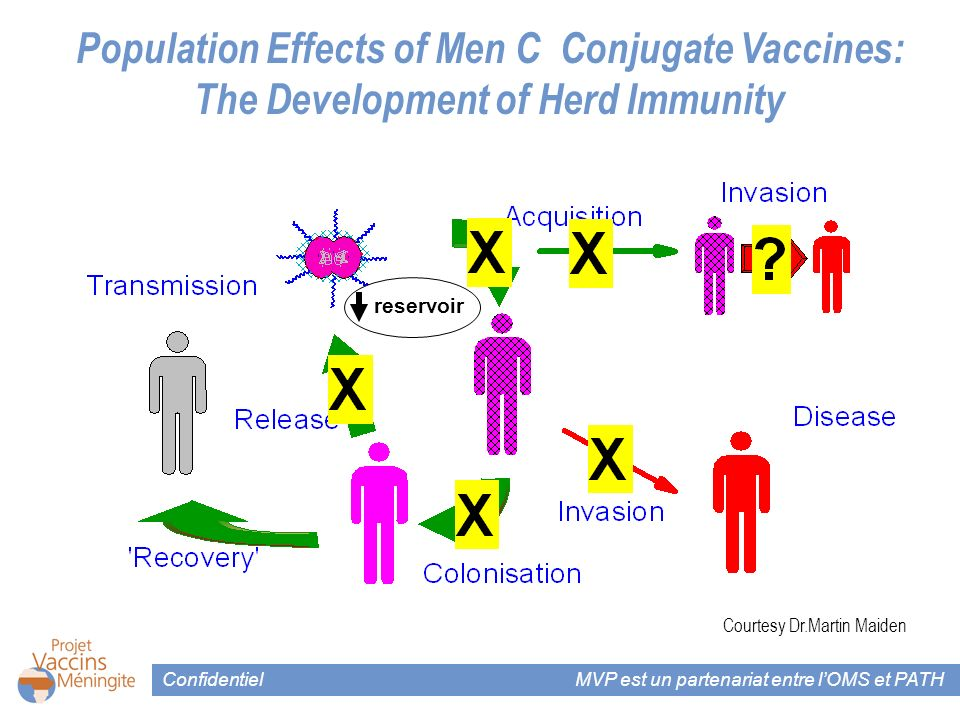 Confidentiel MVP est un partenariat entre lOMS et PATH Courtesy Dr.Martin Maiden Population Effects of Men C Conjugate Vaccines: The Development of He