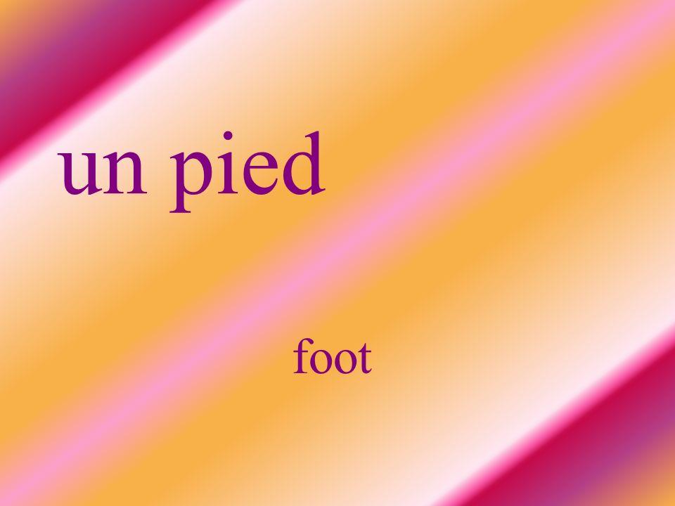 un pied foot