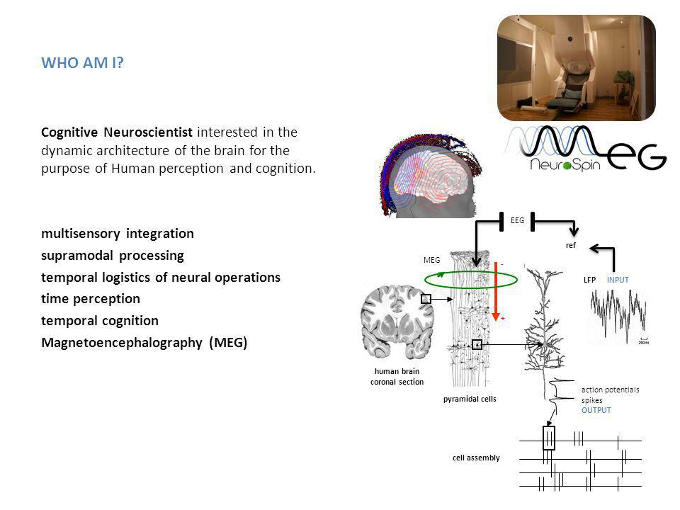 WHO AM I? Cognitive Neuroscientist interested in the dynamic architecture of the brain for the purpose of Human perception and cognition. multisensory
