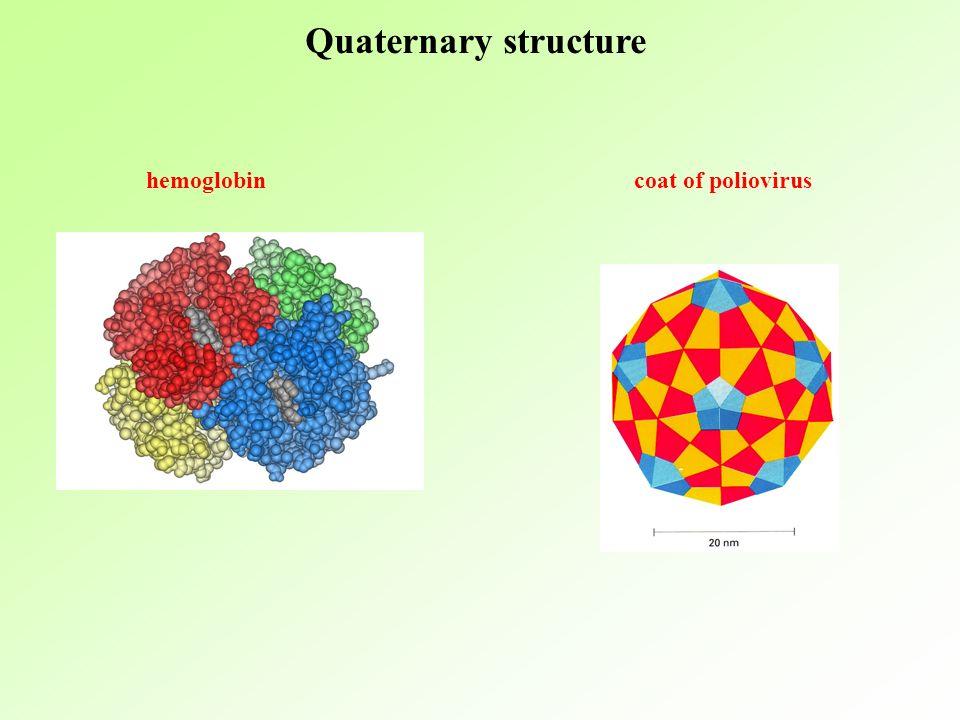 Quaternary structure hemoglobin coat of poliovirus