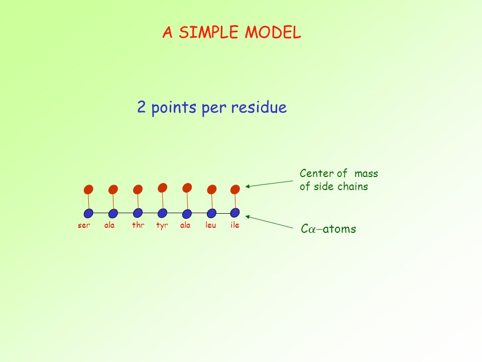 A SIMPLE MODEL 2 points per residue ser ala thr tyr ala leu ile Center of mass of side chains C atoms