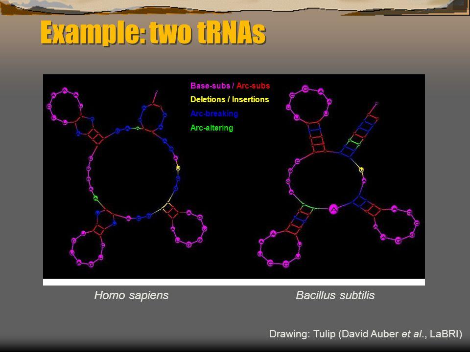 Example: two tRNAs Homo sapiensBacillus subtilis Drawing: Tulip (David Auber et al., LaBRI) Base-subs / Arc-subs Deletions / Insertions Arc-breaking Arc-altering