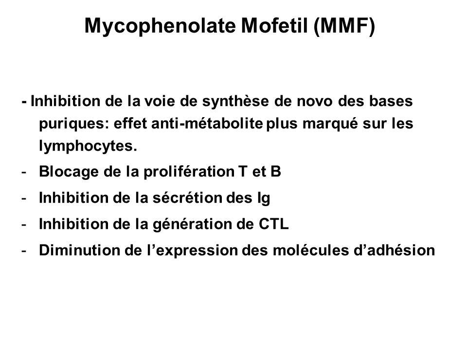 Mycophenolate Mofetil (MMF) - Inhibition de la voie de synthèse de novo des bases puriques: effet anti-métabolite plus marqué sur les lymphocytes. -Bl