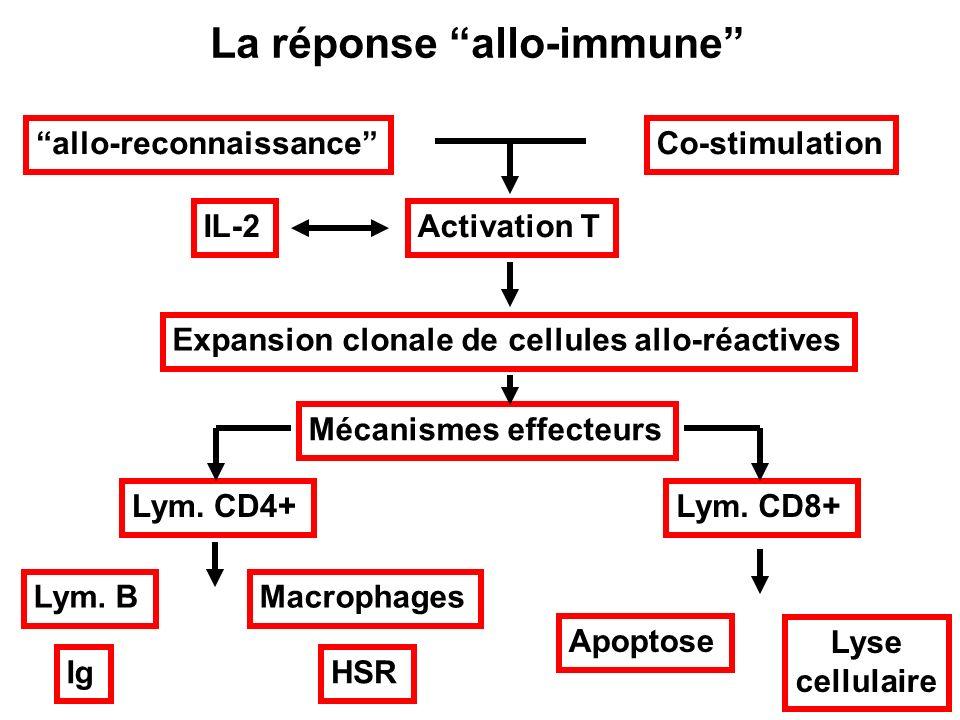 La réponse allo-immune allo-reconnaissanceCo-stimulation Activation TIL-2 Expansion clonale de cellules allo-réactives Mécanismes effecteurs Lym. CD4+