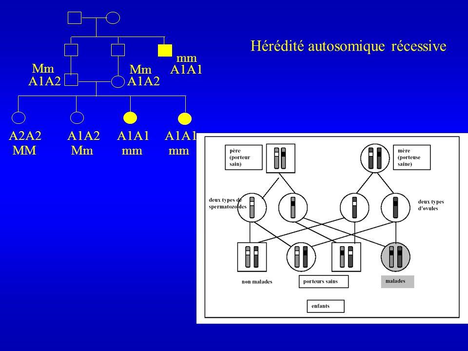 Hérédité autosomique récessive A1A1A1A2 A1A1 A2A2 A1A2 Mm MMmm