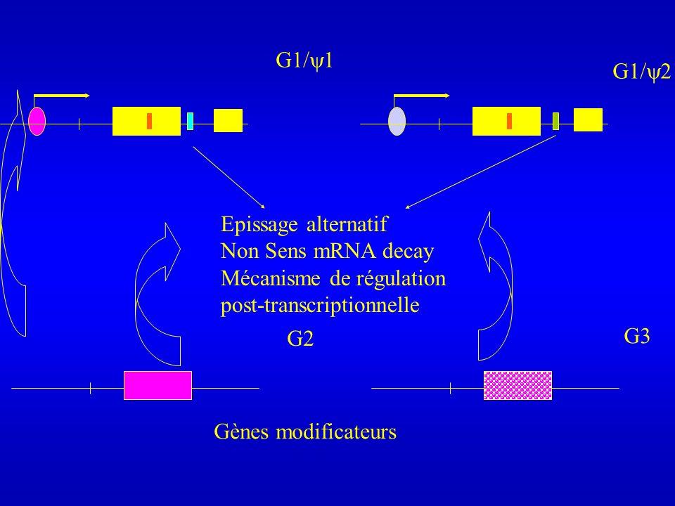 G1/ 1 G1/ 2 Epissage alternatif Non Sens mRNA decay Mécanisme de régulation post-transcriptionnelle G2 G3 Gènes modificateurs