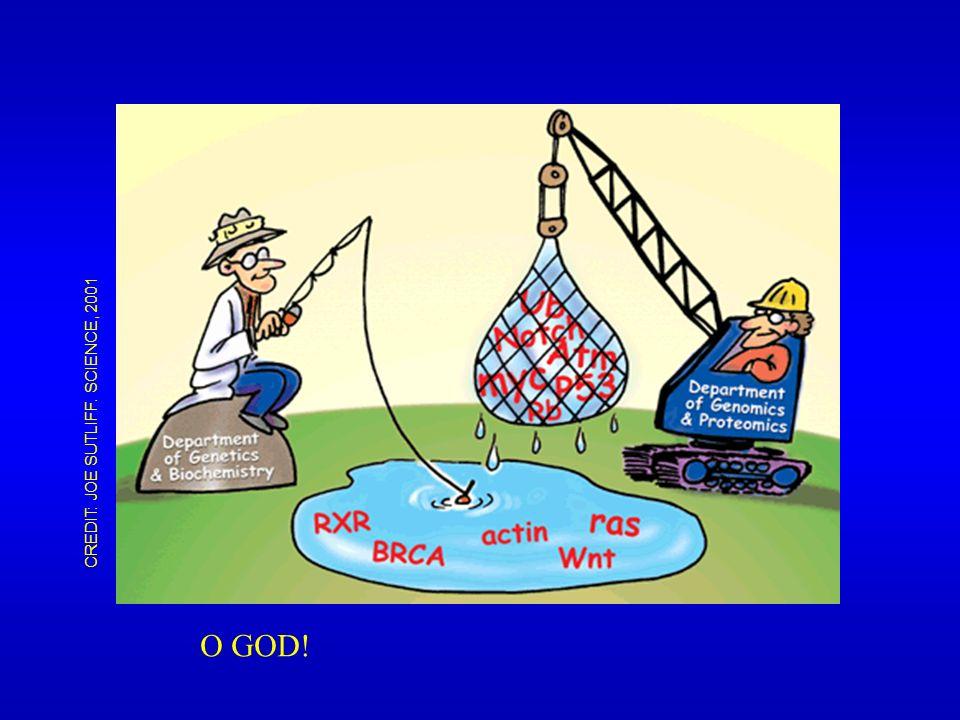 CREDIT: JOE SUTLIFF. SCIENCE, 2001 O GOD!