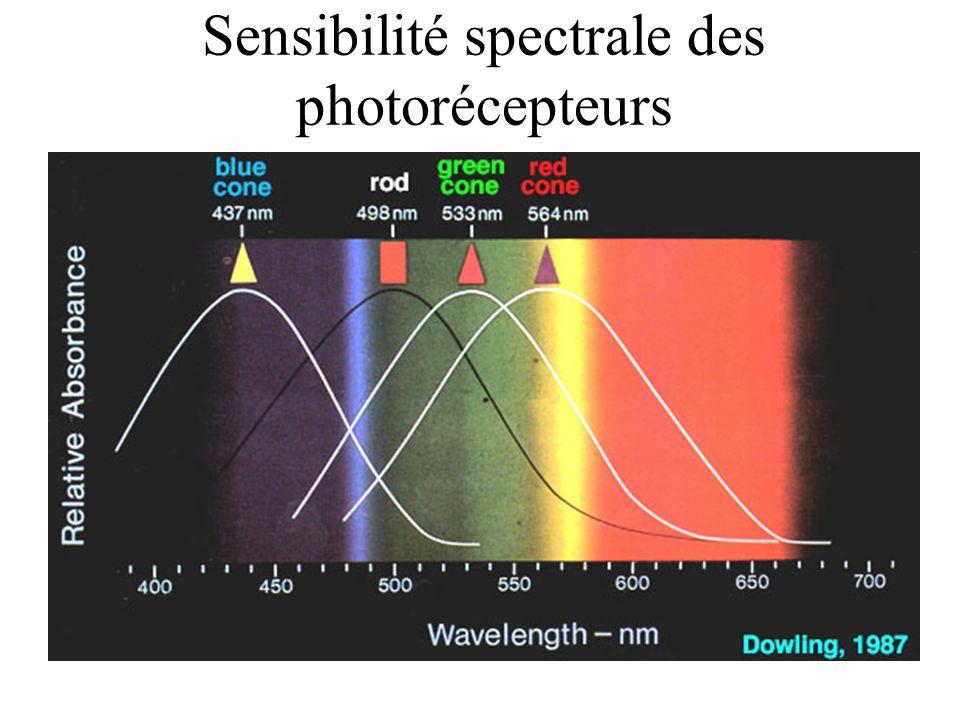 Mélange soustractif des couleurs (pigments)
