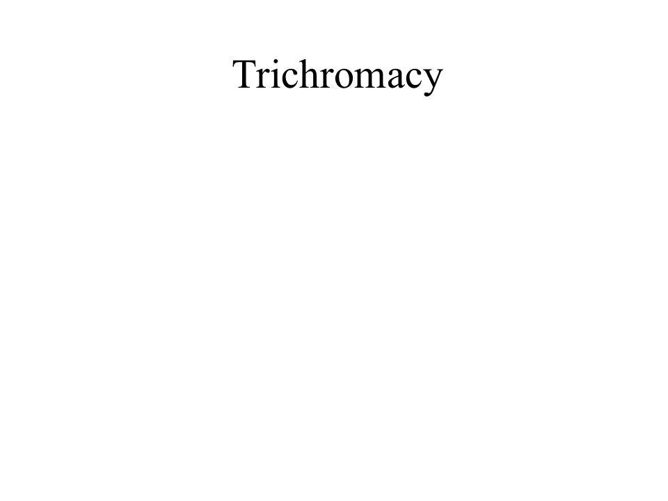Trichromacy (Young-Helmholtz) 3 primaires = blanc X = A + B+ C Télévision, imprimerie