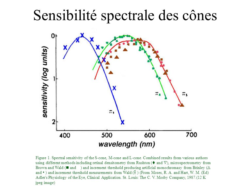 Sommation spatiale et temporelle THE LAWS OF SPATIAL and TEMPORAL SUMMATION Spatial Summation: RICCO S LAW the detectability of a near-threshold flash of light depends only on the product (photons per unit area) X (flash area).