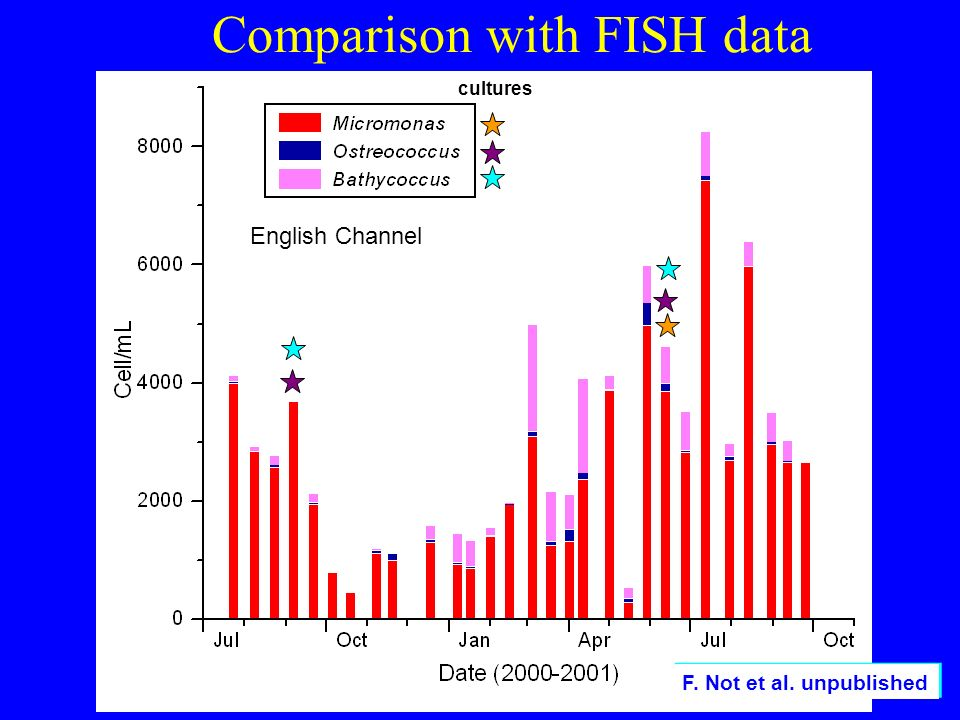 Comparison with FISH data F. Not et al. unpublished English Channel cultures