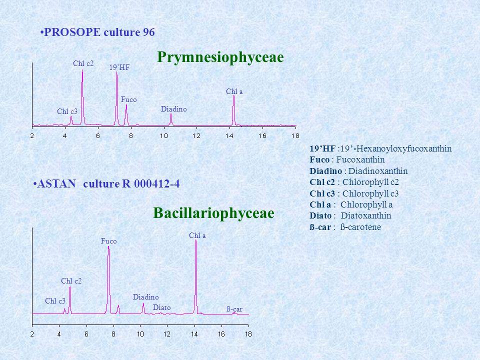 PROSOPE culture 96 ASTAN culture R 000412-4 Chl c2 Chl c3 19HF Fuco Diadino Chl a Chl c3 Chl c2 Fuco Diadino Diato Chl a ß-car 19HF :19-Hexanoyloxyfucoxanthin Fuco : Fucoxanthin Diadino : Diadinoxanthin Chl c2 : Chlorophyll c2 Chl c3 : Chlorophyll c3 Chl a : Chlorophyll a Diato : Diatoxanthin ß-car : ß-carotene Prymnesiophyceae Bacillariophyceae