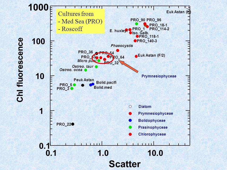 0.11.010.0 Scatter 0.1 1 10 100 1000 Chl fluorescence Ostreo. ocea Bolid.med Bolid.pacifi Ostreo. taur Micro pusi Iso. Galb. E. huxleyi Phaeocystis PR