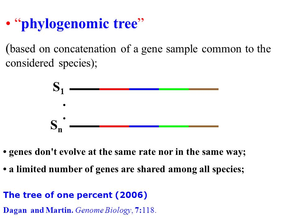 phylogenomic tree ( based on concatenation of a gene sample common to the considered species); S1S1 SnSn.. genes don't evolve at the same rate nor in