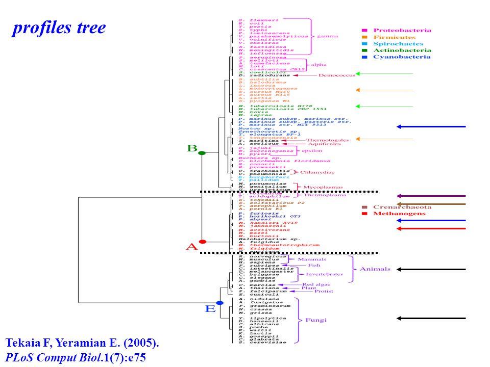 Tekaia F, Yeramian E. (2005). PLoS Comput Biol.1(7):e75 profiles tree