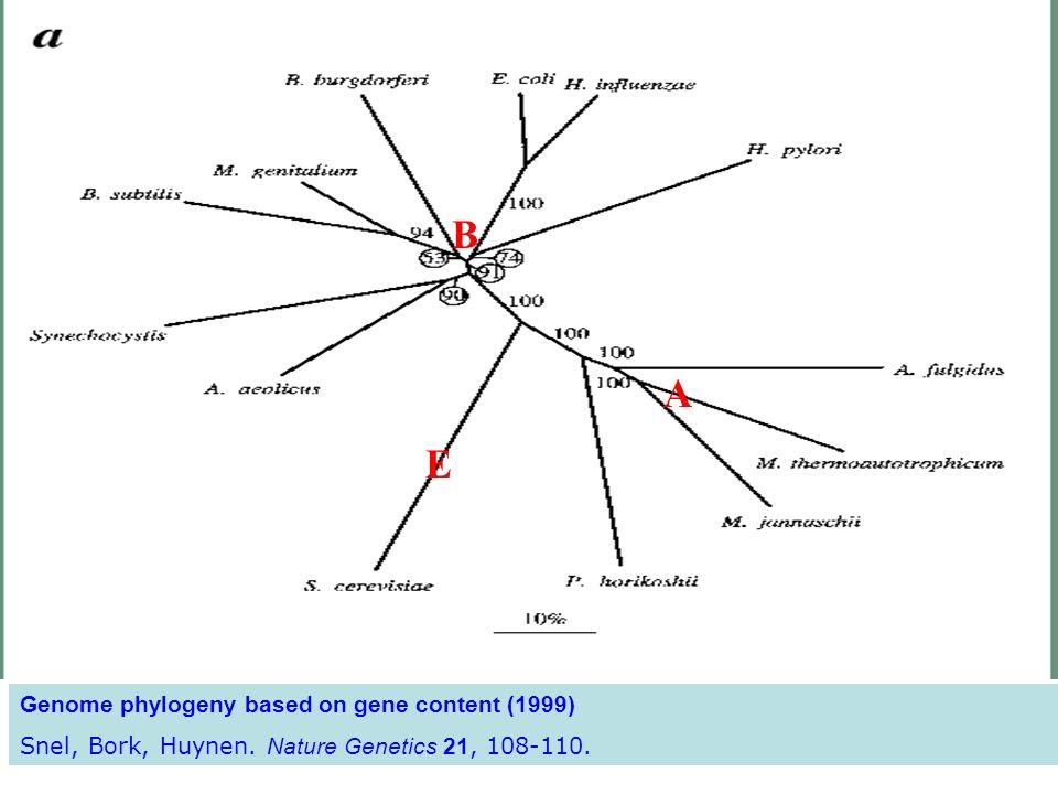 Genome phylogeny based on gene content (1999) Snel, Bork, Huynen. Nature Genetics 21, 108-110. E A B