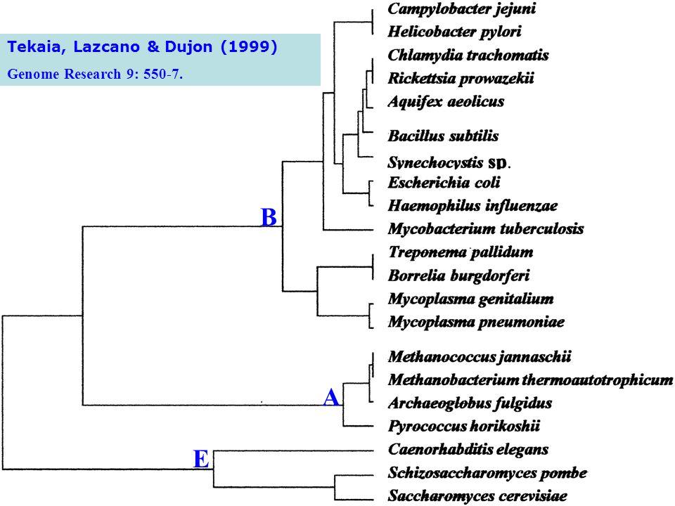 Tekaia, Lazcano & Dujon (1999) Genome Research 9: 550-7. E A B