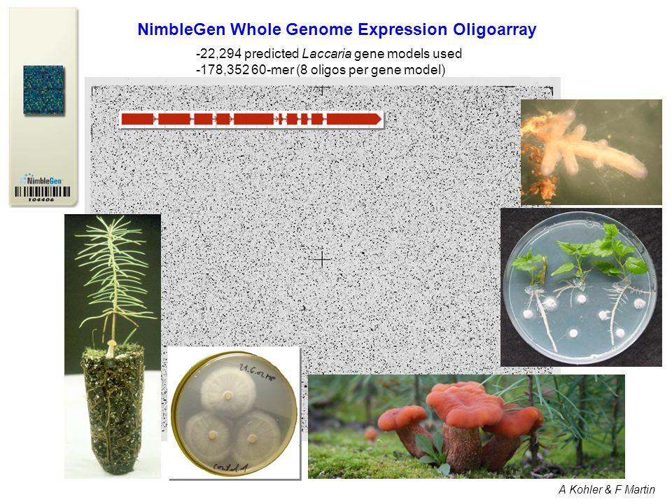 NimbleGen Whole Genome Expression Oligoarray -22,294 predicted Laccaria gene models used -178,352 60-mer (8 oligos per gene model) A Kohler & F Martin