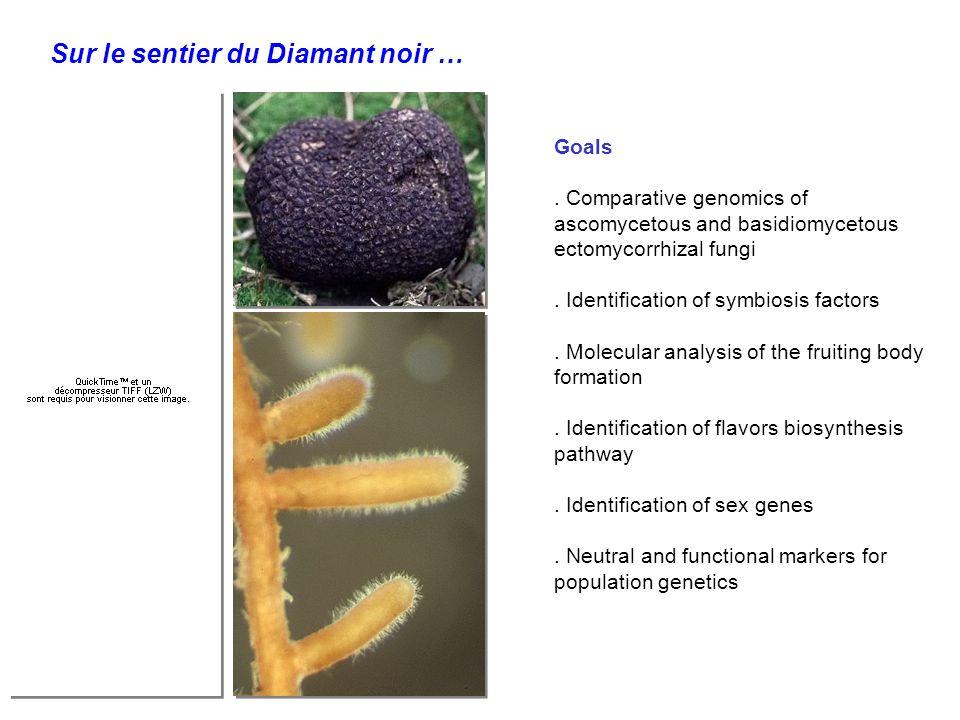 Goals. Comparative genomics of ascomycetous and basidiomycetous ectomycorrhizal fungi.