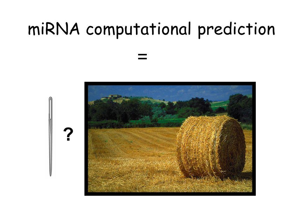 miRNA computational prediction = ?