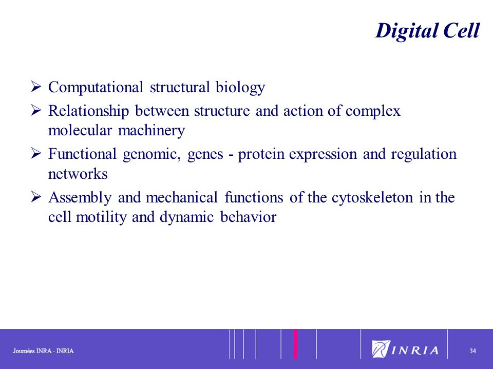 Journées INRA - INRIA34 Digital Cell Computational structural biology Relationship between structure and action of complex molecular machinery Functio