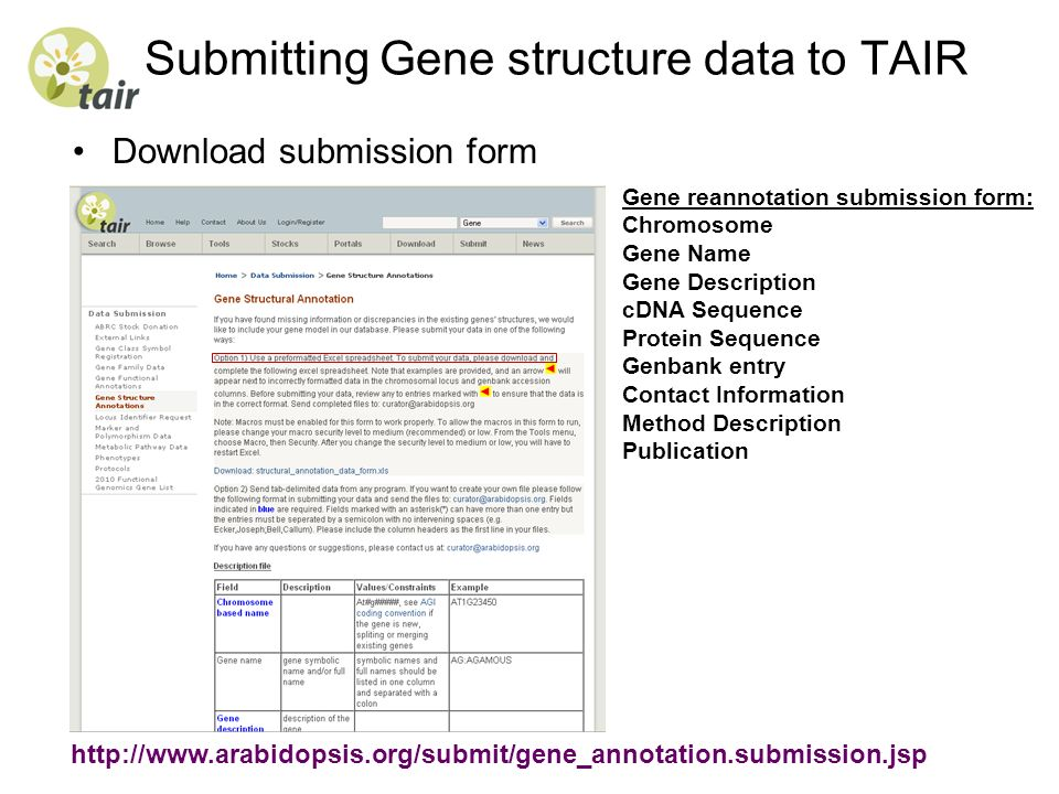 Submitting Gene structure data to TAIR Download submission form Gene reannotation submission form: Chromosome Gene Name Gene Description cDNA Sequence