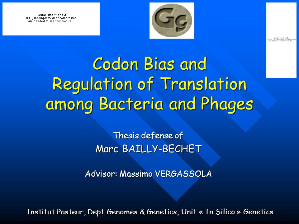 Codon Bias and Regulation of Translation among Bacteria and Phages Thesis defense of Marc BAILLY-BECHET Advisor: Massimo VERGASSOLA Institut Pasteur,